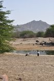 Water hole. Located here at the edge of the desert near Al Ain, UAE Stock Images
