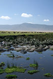Water Hole - Ngorongoro Crater, Tanzania, Africa stock photo