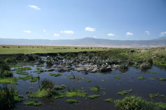 Water Hole - Ngorongoro Crater, Tanzania, Africa Stock Images
