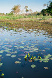 Water hole in Pantanal wetland region, Brazil. Waterhole showing marsh and aquatic vegetation in Pantanal wetland region, Brazil Royalty Free Stock Photography
