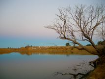 Water hole reflections. Colors in the sky and the bank of a dam reflecting on still waters Stock Photo