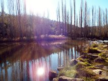 Water hole reflections. Tall leafless trees reflecting in the still water hole Royalty Free Stock Photo