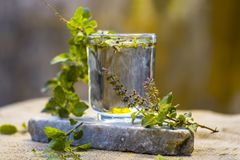 Water of holy basil, tulsi or Ocimum tenuiflorum in a transparent glass. Royalty Free Stock Photos
