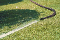 Water from the hose on the green grass in the garden. Royalty Free Stock Photos
