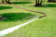 Water from the hose on the green grass in the garden. Stock Photo