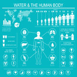 Water and human body infographic royalty free illustration