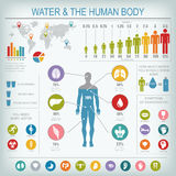 Water and human body infographic. Useful information about water. Concept of healthy lifestyle. Drink more water. Vector image Stock Image