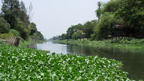 Water hyacinth  on canal. Full Water hyacinth on canal in Thailand Royalty Free Stock Photography