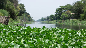 Water hyacinth  on canal. Full Water hyacinth on canal in Thailand Royalty Free Stock Photo