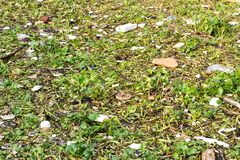 Water hyacinth and garbage in the river. BANGKOK, THAILAND - FEBRUARY 2, 2019: Water pollution concept. Water hyacinth and garbage in the river royalty free stock photo