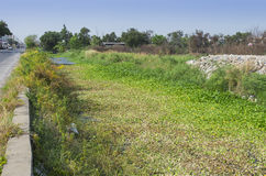 Water hyacinth glowth up full canal pollution-sewage Royalty Free Stock Images