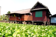 Water hyacinth and the house Royalty Free Stock Photography