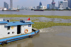 Water Hyacinth in river in Shanghai Royalty Free Stock Photos
