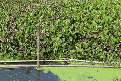 Water Hyacinth Wastewater with Filtration system in canal river stock image