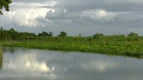 Water hyacinth on water