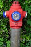 Hydrant pipe. Water hydrant pipe overgrown with weeds Royalty Free Stock Photos