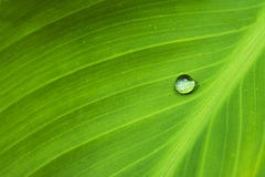 Water I. Waterdrop on a green leaf Royalty Free Stock Photography