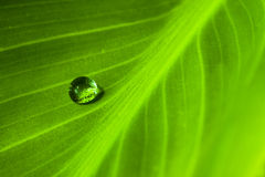 Water I. Waterdrop on a green leaf Stock Images