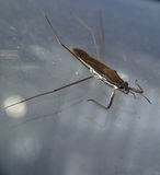 A water insect on a beacon Royalty Free Stock Images