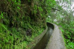 Water irrigation channel, called levada, and footpath for walking near it, in Folhadal, foggy forest, near Encumeada, Madeira isla royalty free stock photography