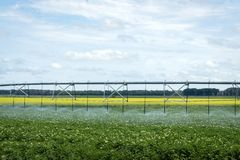 Water irrigation system spraying water over crop in summer. Royalty Free Stock Images