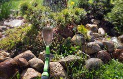 Water jet spray from a garden hose. On the Alpine hill royalty free stock photography