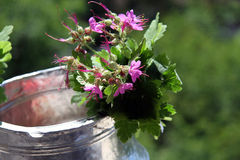 Water jug. Decorated with geraniums Royalty Free Stock Image