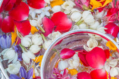 Water in kom met parfum en bloemen wordt gemengd die Stock Foto