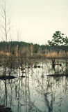 Water. Of the lake in the forest Stock Photography