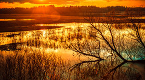 Water landscape at sunset Royalty Free Stock Photo
