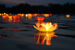 Water lantern on the river. Stunning water lily resembling a torch! Very beautiful and unusual flower-lantern Royalty Free Stock Images