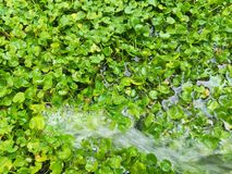 Water the lawn in the garden royalty free stock photo