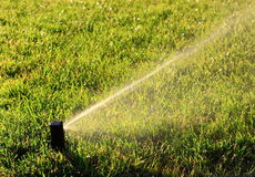 Lawn Care. With Water Sprinkler irrigating in summer morning Stock Photo