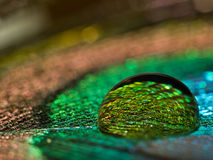 Water on leaf. Water drop on peacock leaf Stock Images