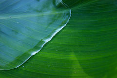 WATER ON THE LEAF Royalty Free Stock Photo