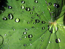 Water on leaf. Leaf with water droplets on it Royalty Free Stock Photos