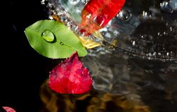 Water, Leaf, Close Up, Drop royalty free stock photos