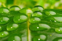 Water on leaf closeup. Water drop on leaf closeup Stock Image