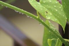 Water, Leaf, Dew, Moisture Stock Photos