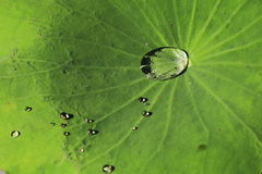 Water on Leaf Royalty Free Stock Image