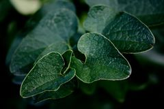 Water, Leaf, Flora, Macro Photography Royalty Free Stock Photography