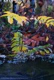 Water, Leaf, Nature, Vegetation royalty free stock photos