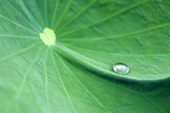 Water on leaf of water lily Stock Photo