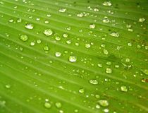 Water on leaves 1 Royalty Free Stock Photography