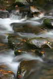 Water and Leaves. Great Smoky Mountains stock image