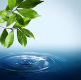 Water and leaves. Wet leaves and drops falling in water royalty free stock image
