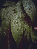 Leaves when it rains royalty free stock images