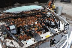 Water level and debris at cars. BROOKLYN, NY - OCTOBER 29: Debris litters inside cars in the Sheapsheadbay neighborhood due to flooding from Hurricane Sandy in Royalty Free Stock Images