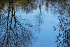 Water level with tree and autumnal leaves. Mirorring stock photography
