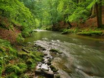 Water level under fresh green trees at mountain river. Fresh spring air in the evening Stock Images